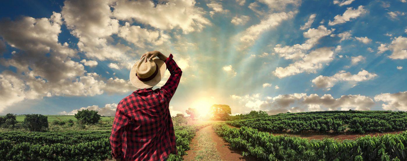 Kaffeebauer mit Blick auf Kaffeeplantage bei Sonnenaufgang