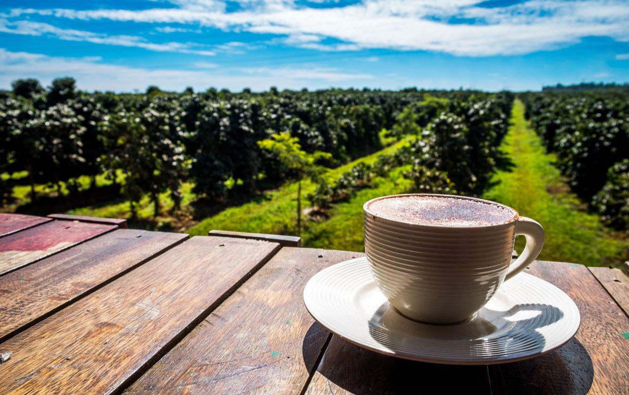 schöne Aussicht auf Kaffeeplantage